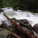 Eurobin Creek by Natalie Ord