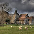Sheep may safely graze by brianfuller75