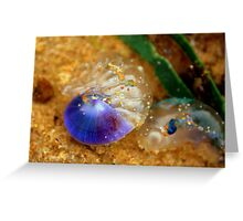 Purple sea snail + blue-bottle Greeting Card