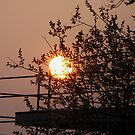 Sundown behind the Tree by RosiLorz