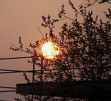Sundown behind the Tree by RosiLorz
