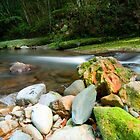 Tranquility - Couchy Creek, Numinbah Valley NSW by Beth  Wode