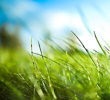 Close up Grass by MRHDR