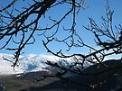 mountains through trees by millymuso