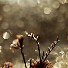 find warmth by Angel Warda