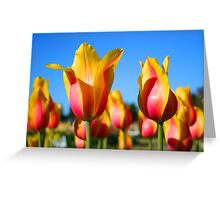 Yellow and pink colored tulips Greeting Card