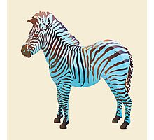 Baby Blue Zebra  Photographic Print