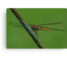 Amber dragon on a guy wire, Front Canvas Print