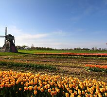 Windmill and dutch tulip gardens by snehit