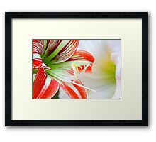 red and white lilly flowers Framed Print