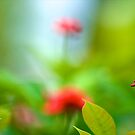 Who blurred? I didn't! by Kornrawiee