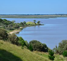 Mysterious Island, Lake Connewarre. by ronaldbegg