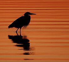 Magic Hour at Merritt Island by Phillip  Simmons