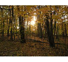 Wooded Tranquility- sunset in the woods Photographic Print