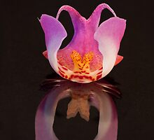 Duplicity. From a Phalaenopsis on a mirror. by Bigganvi