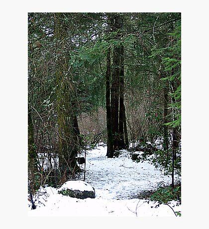 Woodland Dawn Photographic Print