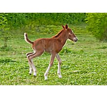 Newborn foal Photographic Print