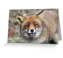 Red Fox - 1649 Greeting Card