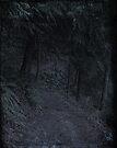 Schwarzwald by Jeff Clark