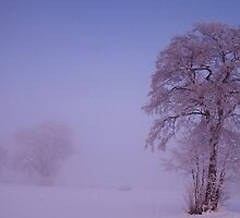 Bayern Winter by a0905671
