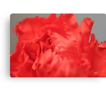 Red Carnation close up Canvas Print