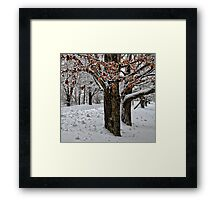Maple Trees - Holding Onto Their Color Framed Print