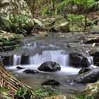 Tamborine Waterfalls Walk by Paul Duckett