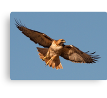 021511 Red Tailed Hawk Canvas Print