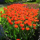 Flowers park by JF Gasser