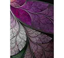 Splits Elliptic Mural 3 Up Close Photographic Print