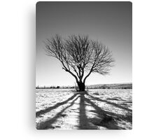 Tree projection Canvas Print