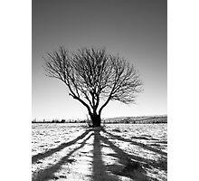 Tree projection Photographic Print