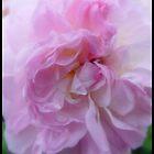Pink Petals by HELUA