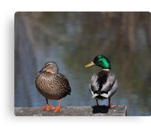 Ducks on a Dock Canvas Print