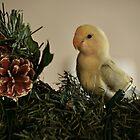 Love Bird by terrebo