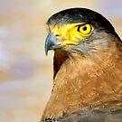 Eagle head by srijanrc