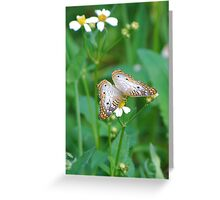 White butterfly on Spanish Needles Greeting Card
