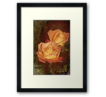 The Beauty of a Rose Framed Print
