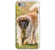 Leonberger dog at play iPhone Case/Skin