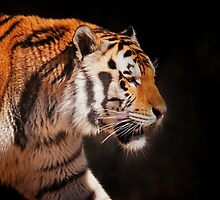On the prowl . . . by Bonnie T.  Barry