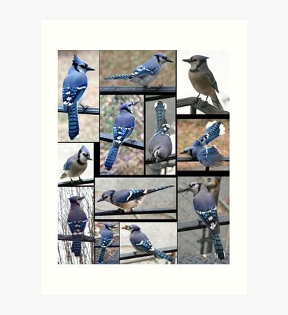 Jazzy Blue Jays 3 Art Print