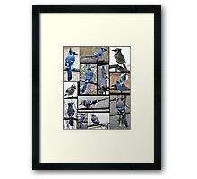Jazzy Blue Jays 3 Framed Print