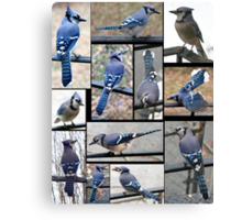 Jazzy Blue Jays 3 Canvas Print