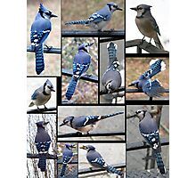 Jazzy Blue Jays 3 Photographic Print