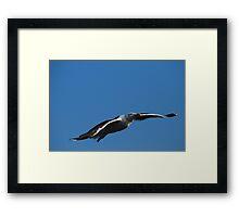 Great Black-backed Gull Framed Print