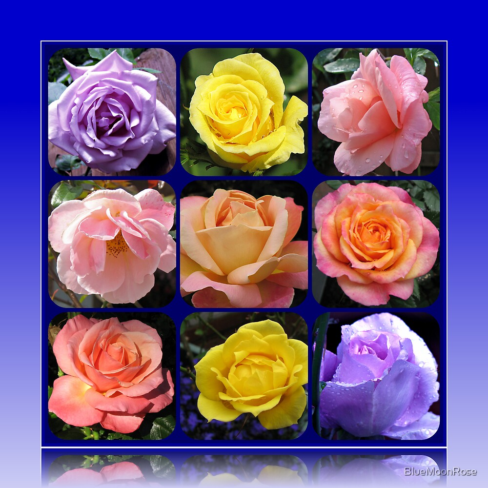 Nine Roses Collage by BlueMoonRose