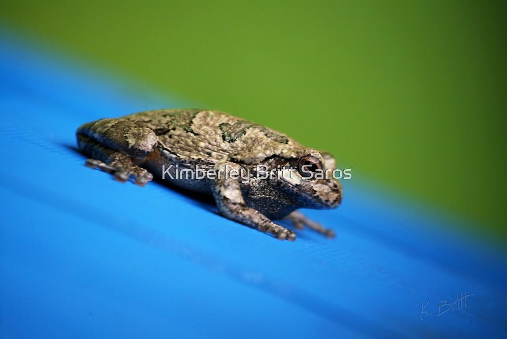 Sliding Toad by KBritt