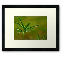 Refreshing Light Rain Framed Print