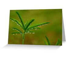 Refreshing Light Rain Greeting Card