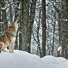 The Howling by Bill Maynard